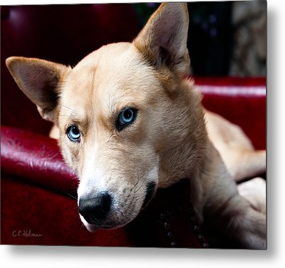 Zoey Metal Print by Christopher Holmes