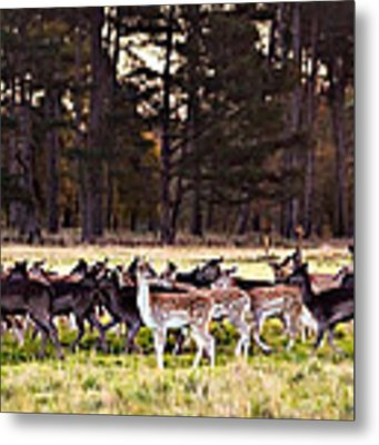 Deer In The Phoenix Park - Dublin Metal Print by Barry O Carroll