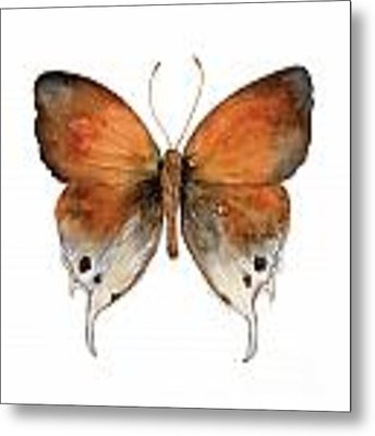 47 Mantoides Gama Butterfly Metal Print by Amy Kirkpatrick