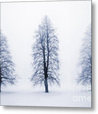 Winter Trees In Fog Metal Print