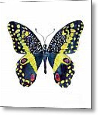 73 Citrus Butterfly Metal Print by Amy Kirkpatrick
