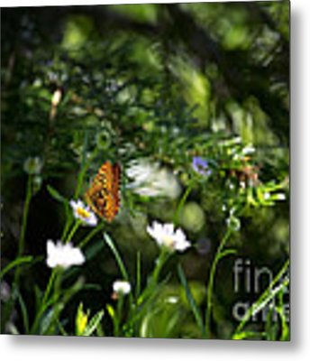 A Butterfly's World Metal Print by Belinda Greb