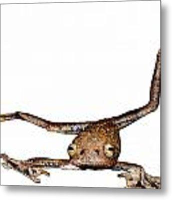 Annam Flying Frog Metal Print