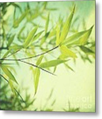 Bamboo In The Sun Metal Print by Priska Wettstein