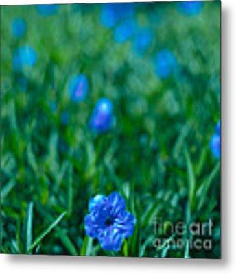 Blue Flower Metal Print by Julian Cook