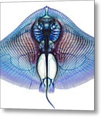 Butterfly Ray Metal Print by Adam Summers