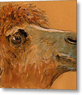 Camel Head Study Metal Print