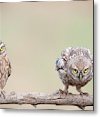 Curiosity Of Chick Metal Print by E.amer
