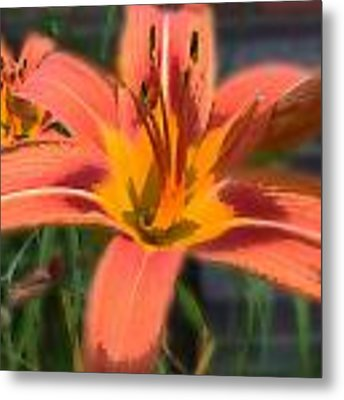 Day Lilly Metal Print by David Armstrong