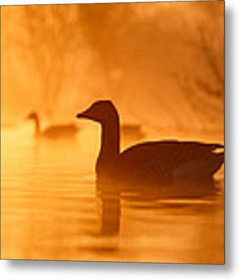 Early Morning Mood Metal Print