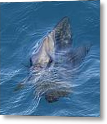 Fish Face Metal Print by Debbie Cundy
