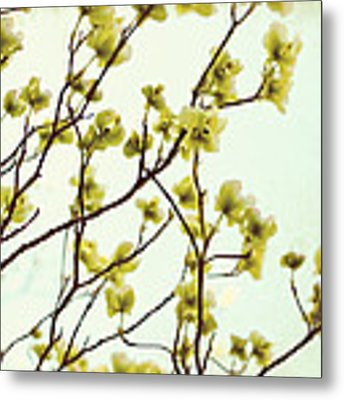 Green Dogwood Metal Print