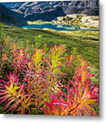 Grizzly Bear Fireweed Metal Print by Tim Newton
