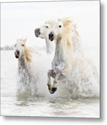 Horses  Hight Key Metal Print by Ciro De Simone