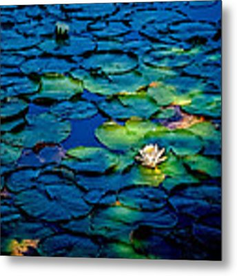 Lonesome Lily Metal Print by Jim DeLillo