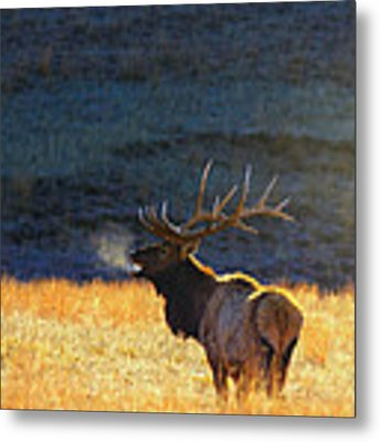 Morning Breath Metal Print