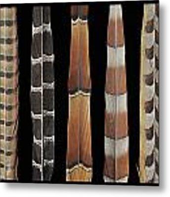 Pheasant Tail Composite Metal Print by Chris Maynard