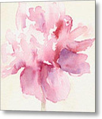 Pink Peony Watercolor Paintings Of Flowers Metal Print by Beverly Brown