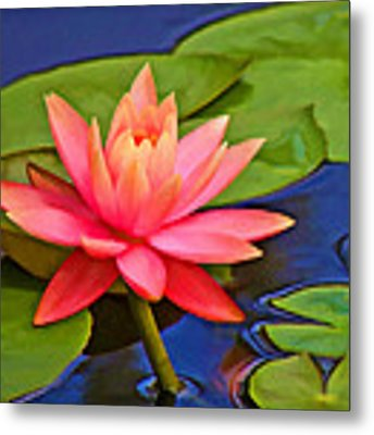 Pink Water Lily  Metal Print by Grace Dillon