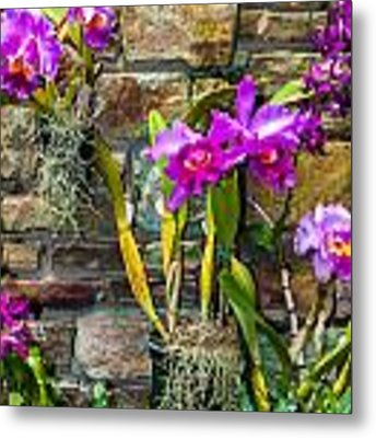 Purple Orchids With Cultured Stone Background Metal Print by Alex Grichenko