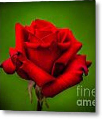 Red Rose Green Background Metal Print