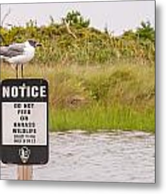 Seagull Standing On A Notice Sign Metal Print by Alex Grichenko