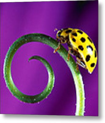 Side View Close Up Of Yellow Ladybug Metal Print by Panoramic Images