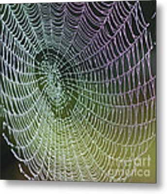 Spider Web Metal Print by Heiko Koehrer-Wagner