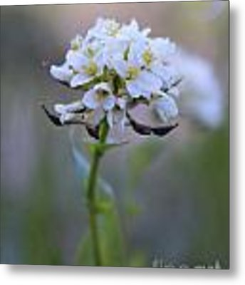 Spring In The Cimarrons Metal Print by Kate Avery