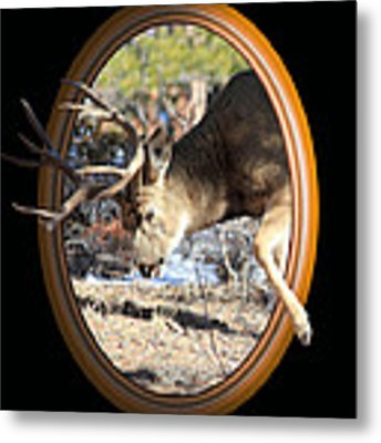 Stepping Out Metal Print by Shane Bechler