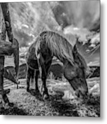 The Horse Metal Print by Faris