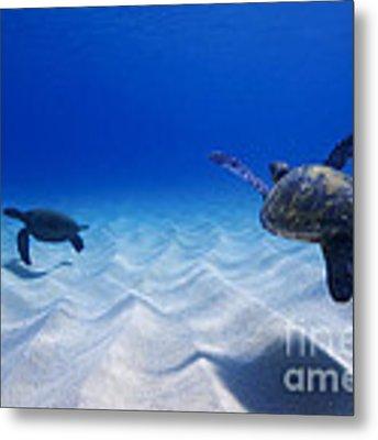 Turtle Pair Metal Print by Sean Davey