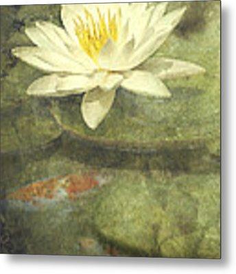 Water Lily Metal Print by Scott Norris