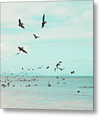 Birds In Flight Metal Print by Kim Fearheiley
