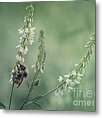 Collecting The Summer Metal Print