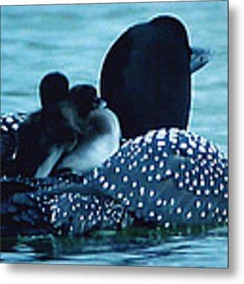 Duck Family Joy In The Lake  Metal Print by Colette V Hera  Guggenheim