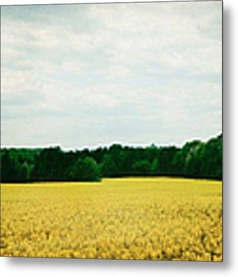 Field Of Yellow Wildflowers Metal Print