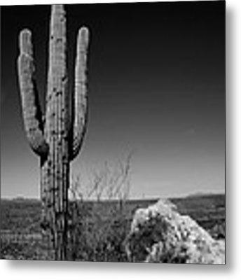 Lone Saguaro Metal Print by Chad Dutson