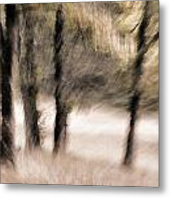 Passing By Trees Metal Print