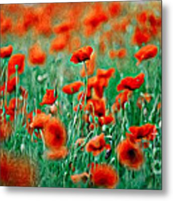 Red Poppy Flowers 04 Metal Print by Nailia Schwarz