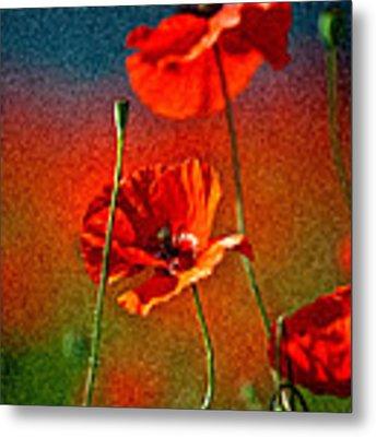 Red Poppy Flowers 08 Metal Print