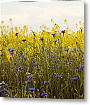 Yellow And Blue Wildflowers Metal Print by Kim Fearheiley