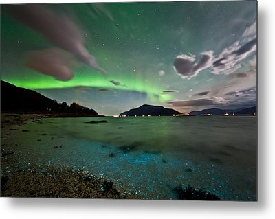 Auroras And Dinoflagellates Metal Print