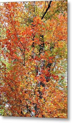Autumn Confetti Metal Print