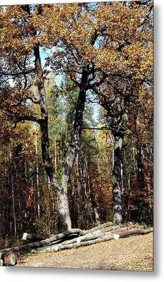 Autumn In Forest Metal Print