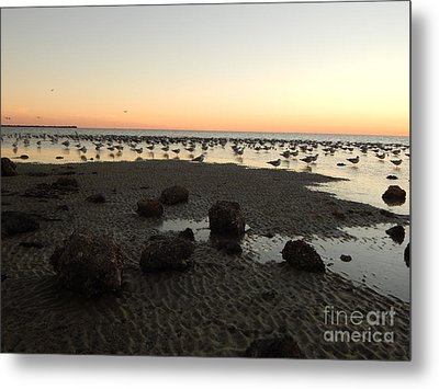 Beach Rocks Barnacles And Birds Metal Print