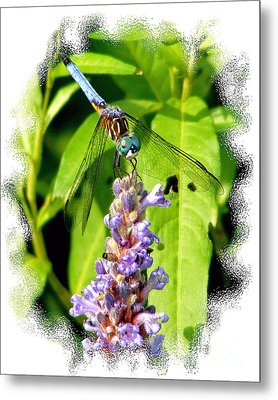 Metal Print featuring the photograph  Blue Dragonfly by Lila Fisher-Wenzel