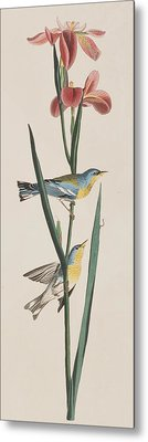 Blue Yellow-backed Warbler Metal Print by John James Audubon