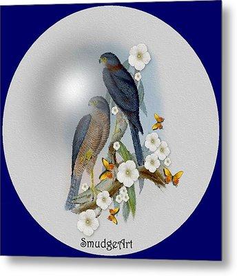 Collared Sparrow Hawk Metal Print by Madeline  Allen - SmudgeArt