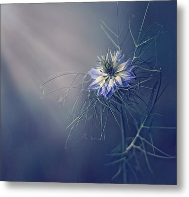....* Metal Print by Dimitar Lazarov -